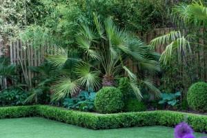 bambusova palma