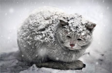 cats_cold_weather_s