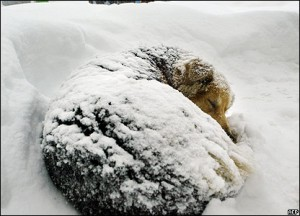 freezing-dog