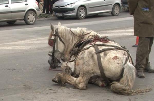 konj 10