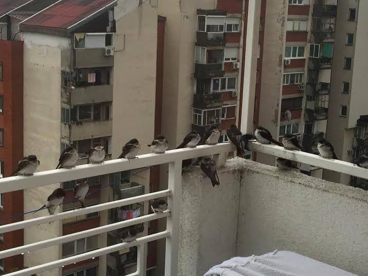 ptice 3
